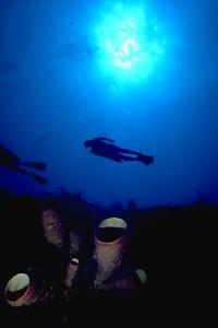 DiverSilhouette