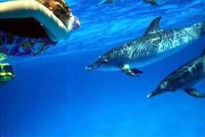 Dolphin ivana