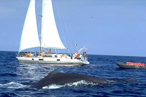 expedition boat with sperm whale