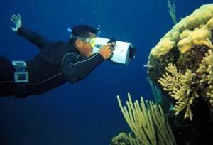 felix coral